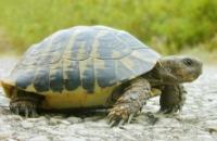 turtle-crossing
