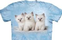 cloud_kittens